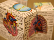 解剖生理学・病態生理学